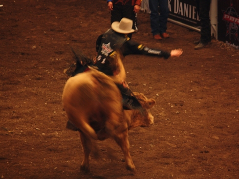 No Bull, Cowboys Stadium Gets a Rodeo