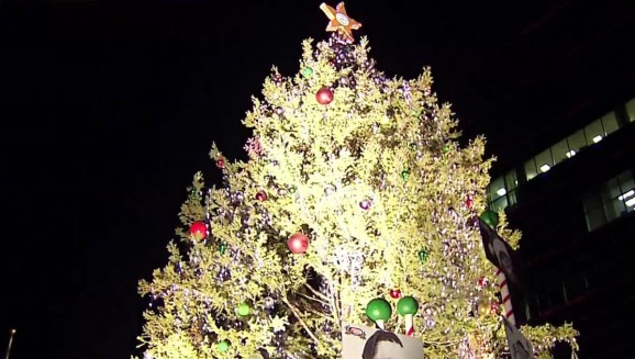 largest living christmas tree in texas lit at tms - Largest Christmas Tree