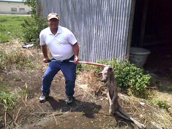 Chupacabra Texas goat