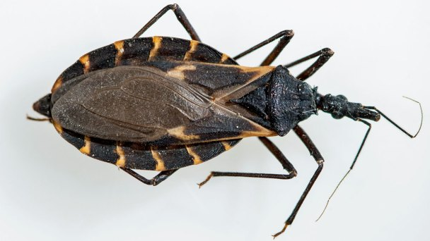 Identifying Kissing Bugs From Similar Bugs