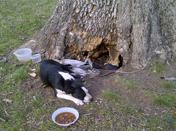 Dog and Puppies Rescued From Tree