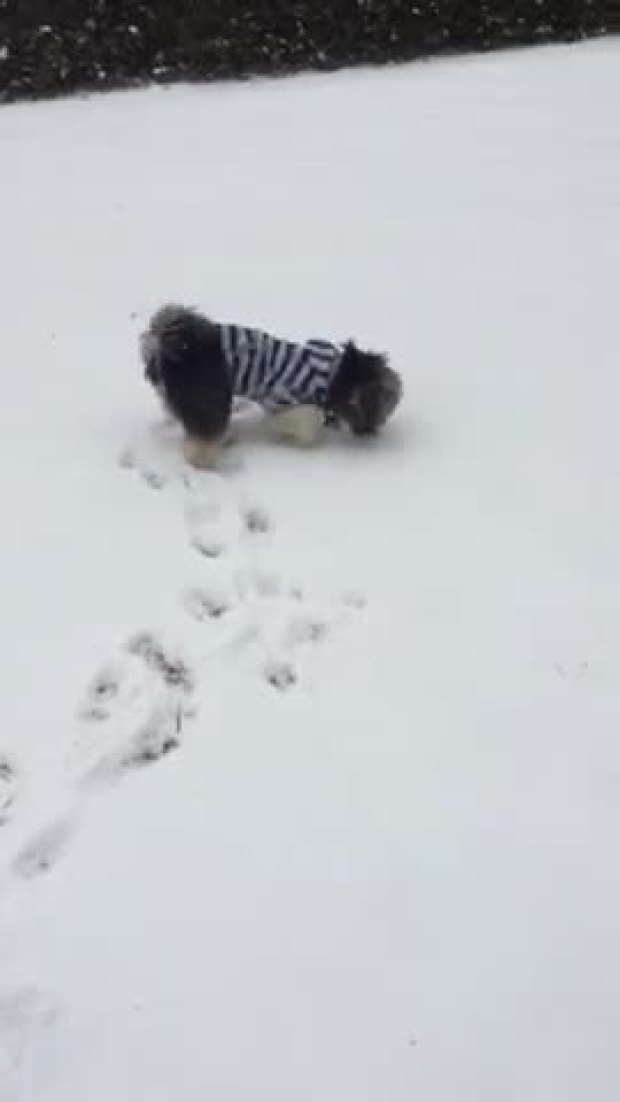 Snow and a puppy!!