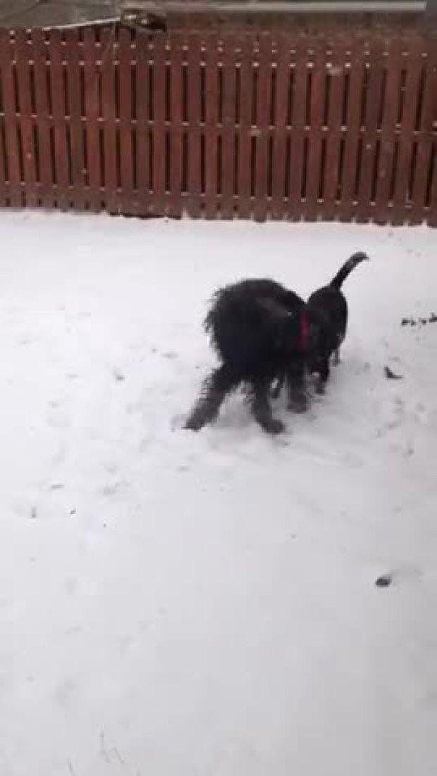 grapevine dogs having fun