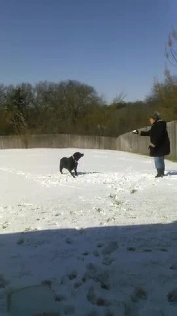 dog loving snow