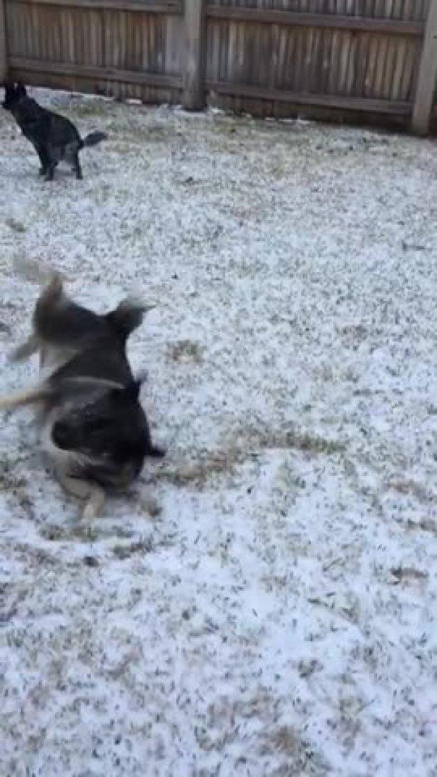 Doggie Snow Angel
