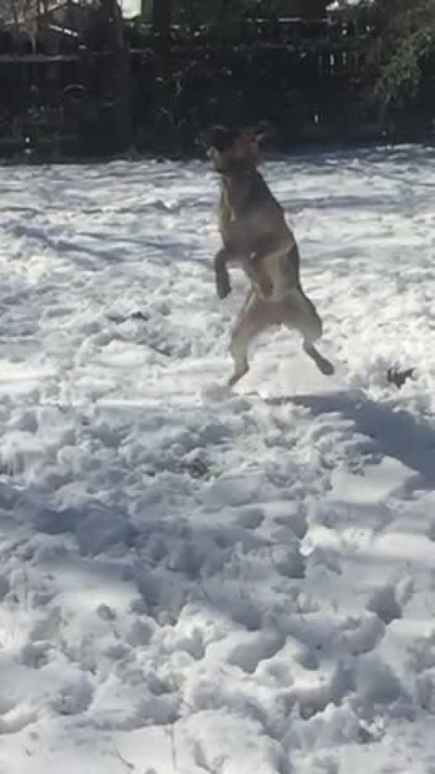 Catching some snow!