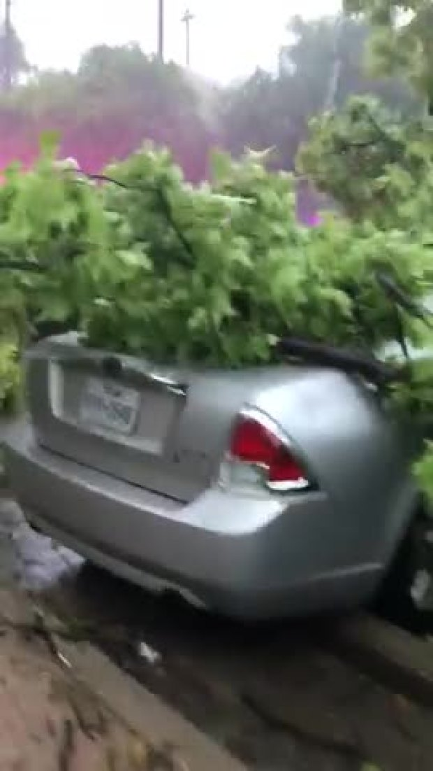 Tree falls and crushes car