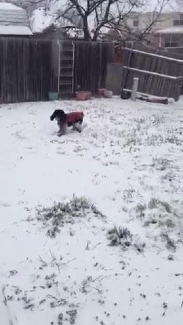 Snow video