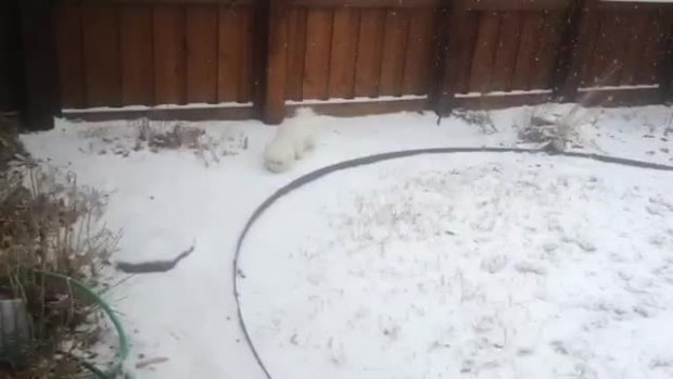 Plano puppy in snow video