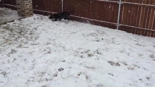 Pixie playing in the snow