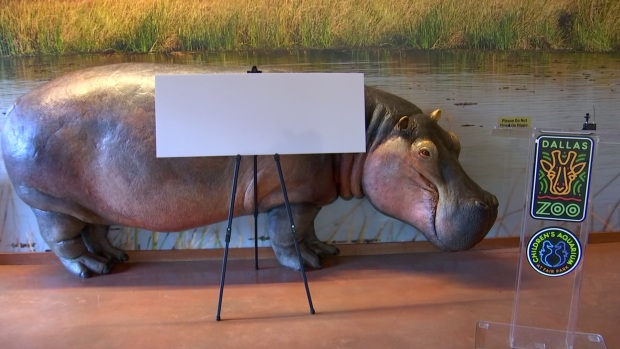 [DFW] Dallas Zoo Reveals Gender and Name of New Baby Hippo