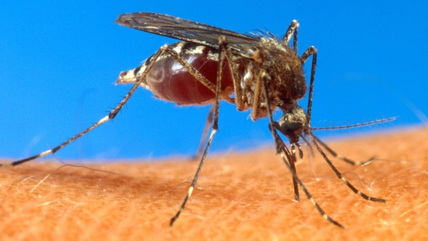 [DFW] First Human Case of Chikungunya in Texas