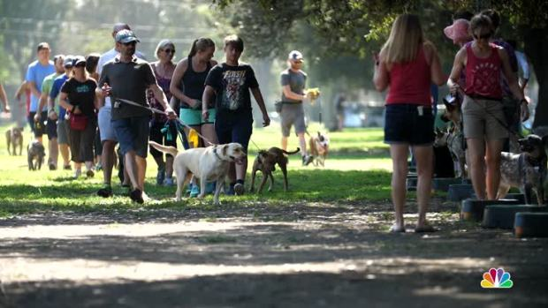 Non-Profit Offers Training, Community for Pit Bull Owners