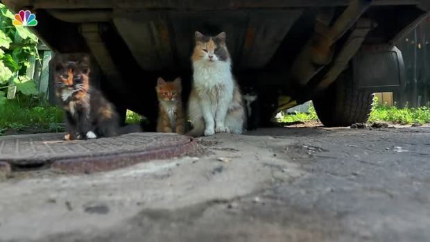 [NAT] Dos and Don'ts With Stray Cats