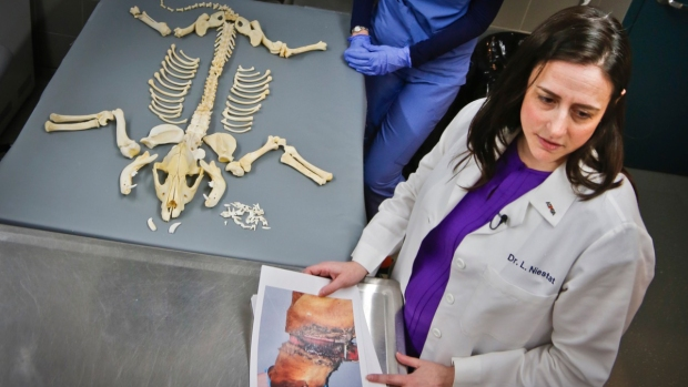 [NATL] CSI for Animals: Forensic Vets Battle Pet Abuse
