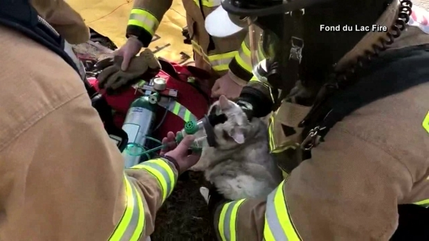 [DFW] Firefighters Rescue Cat from House Fire