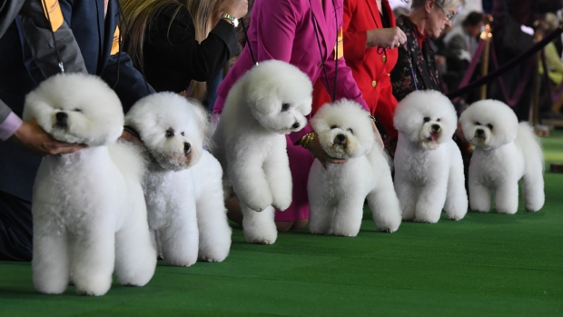 [NATL] The Dogs of Westminster Dog Show 2019