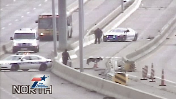 [DFW] U.S. 67 HOV Closed for Dog on the Highway