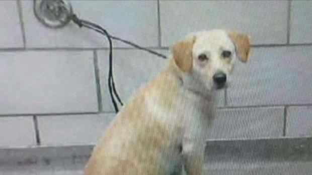 Advocates, Attorneys Fighting to Save Infamous Dallas Dog