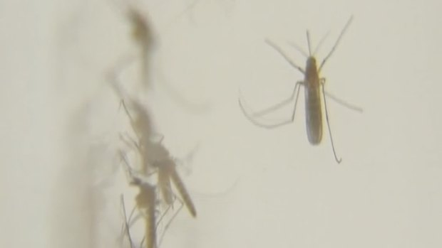 [DFW] West Nile Cases Come with Warning