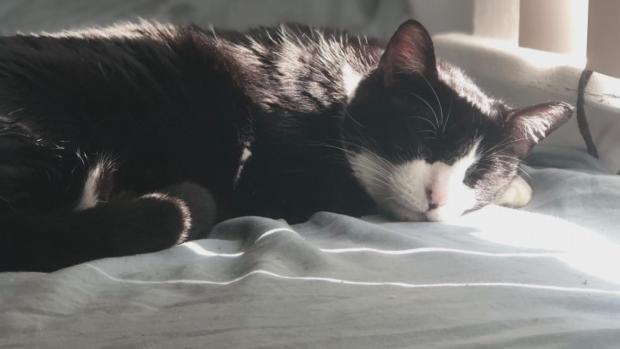 [DFW] Fumigation Kills Pet Cat