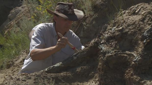 [DFW] Dinosaur Skull Discovered