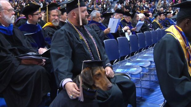 [NATL-DFW] Service Dog Steals Show at College Graduation