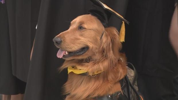 [NATL-NY] Woman, Service Dog Graduate From College Together