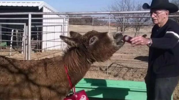 [DFW] Dr Pepper-Drinking Texas Donkey Returns Home After 2 Years