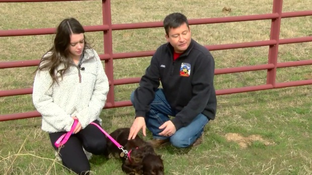 [NEXSTAR] Service Dog Found After Missing for a Week