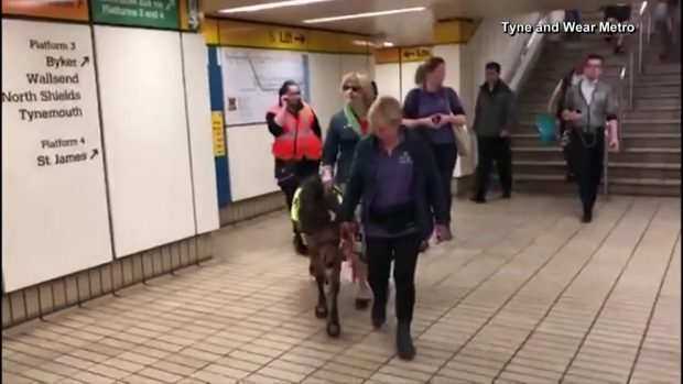 Service Pony-in-Training Could Help Woman Navigate Transit System