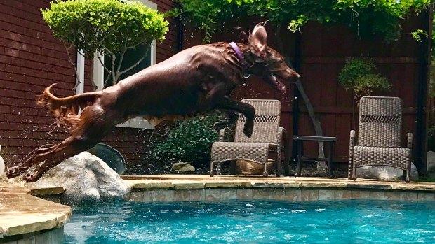 Dog Days of Summer 2017 - Gallery IV