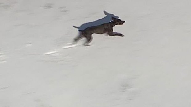 Dog Having a Blast in the Snow (Set to Music)