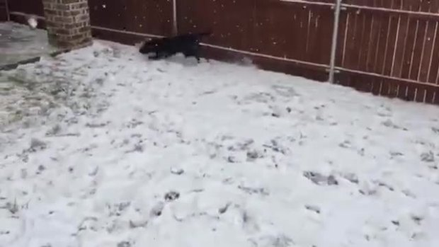 Snow play (dog)