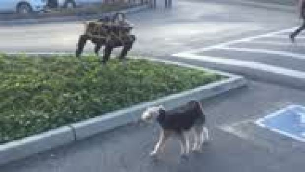 [NATL] Watch: Robot Dog Interacts with Real Dog