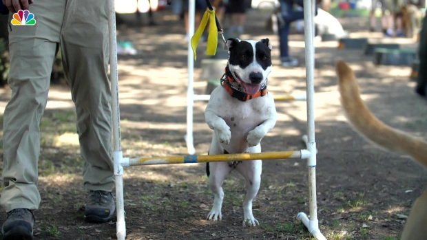 [NATL] What Does it Mean When a Dog Has a Yellow Ribbon?