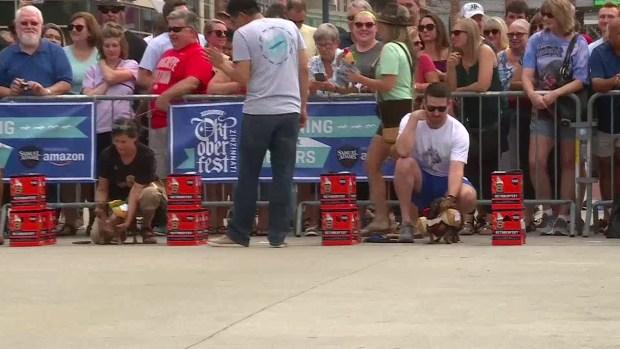 [DFW] Wiener Dog Races at Oktoberfest