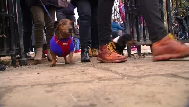 [DFW] Annual Sausage Walk Held in London