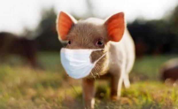 Swine Flu SWAG
