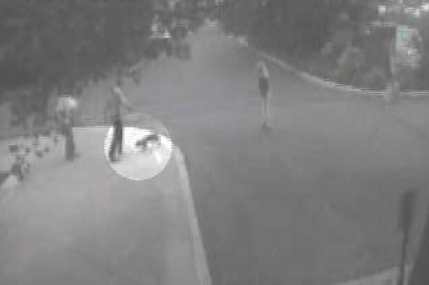 [HAR] Hartford Fox Attack Caught On Tape