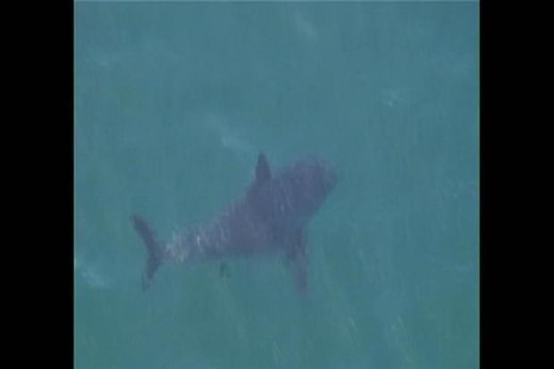[LA] Shark Behavior Remains a Mystery, Expert Says