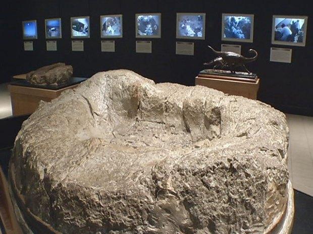 Gallery: Dallas' Unseen Alamosaurus Fossils