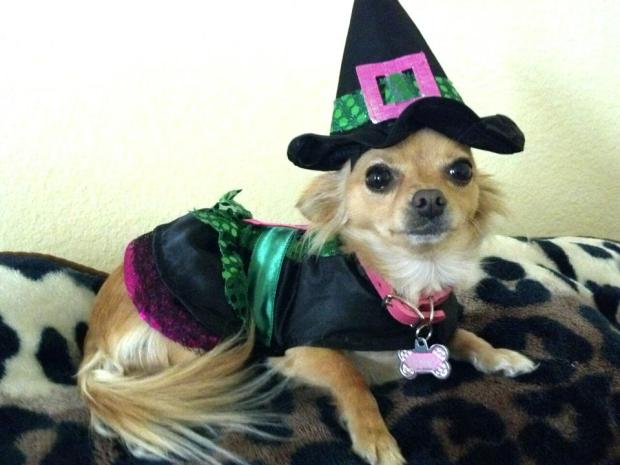 [LA] Your Pets' Halloween Costumes