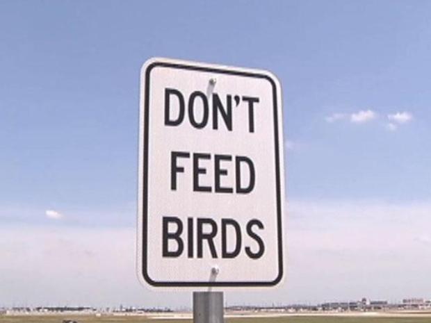 [DFW] Bye, Bye, Birdie