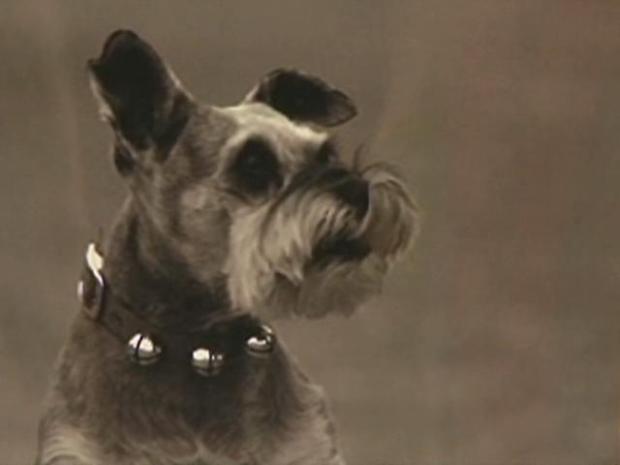 [LA] Dog Killed in OC Attack