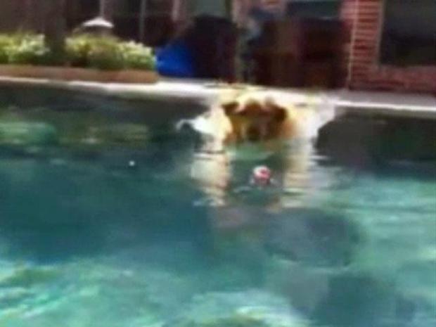 [DFW] Lexi Enjoys a Swim and Fetching the Paper