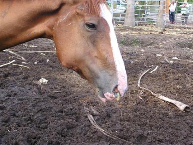 [MI] Slaughter horse