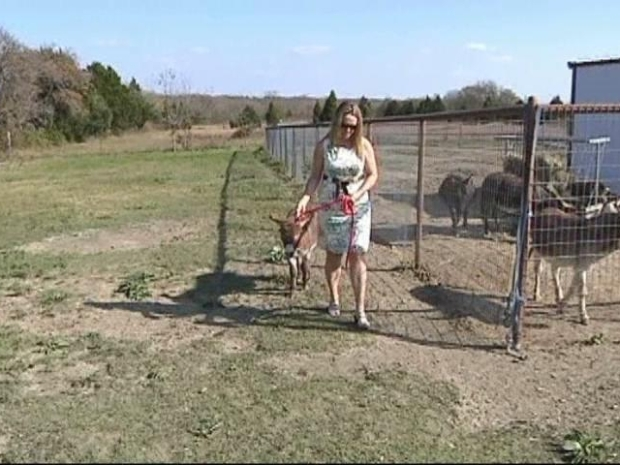 [DFW] Sunny the Donkey is Home
