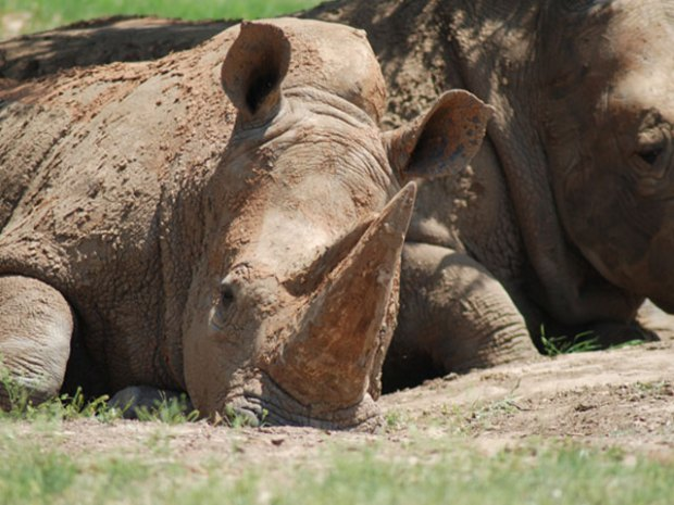 The Animals of Fossil Rim