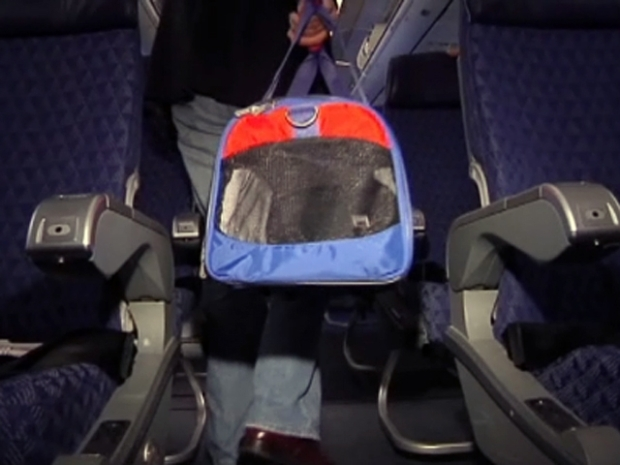 [DFW] Your Pet's Guaranteed Airplane Seat